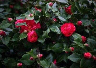 Camellia moisturises and nourishes skin